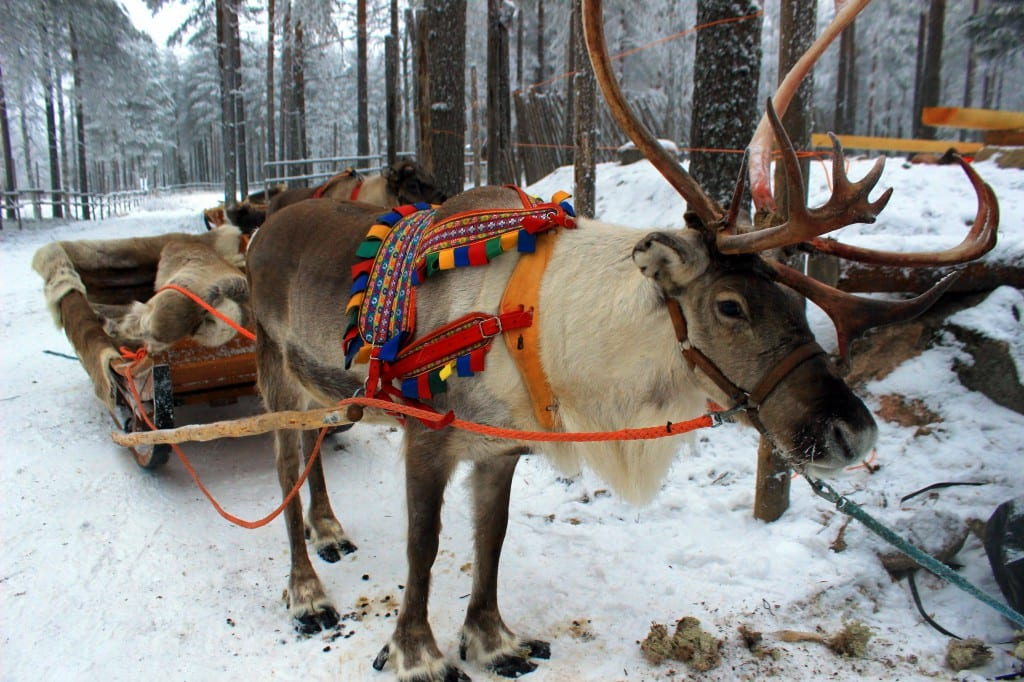 Sledetur i Finland får absolutt julefølelsen på plass