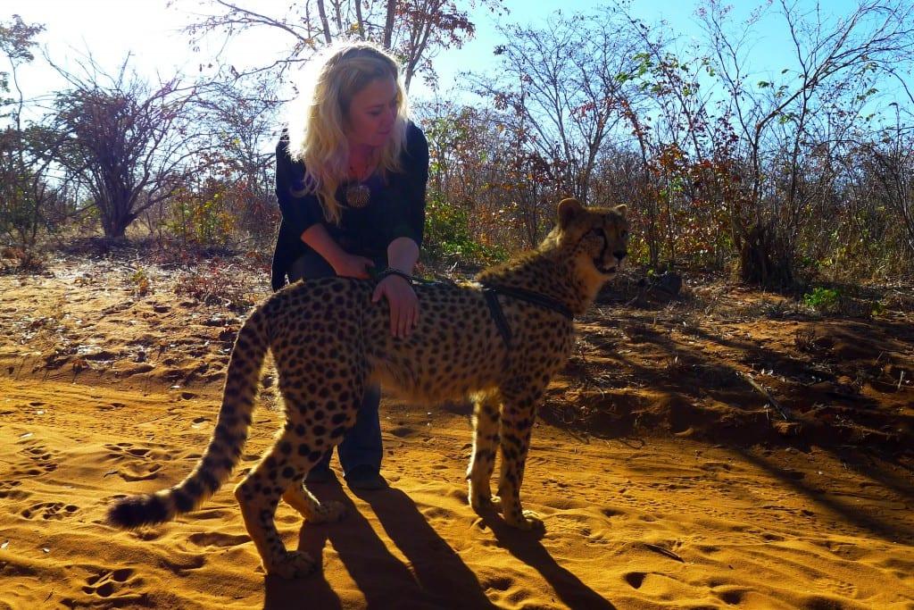 Å gå på tur med en gepard er en ganske annerledes opplevelse