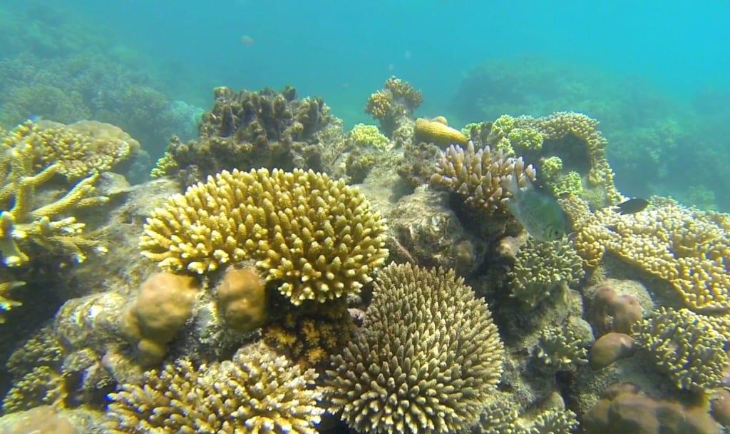 koraller3