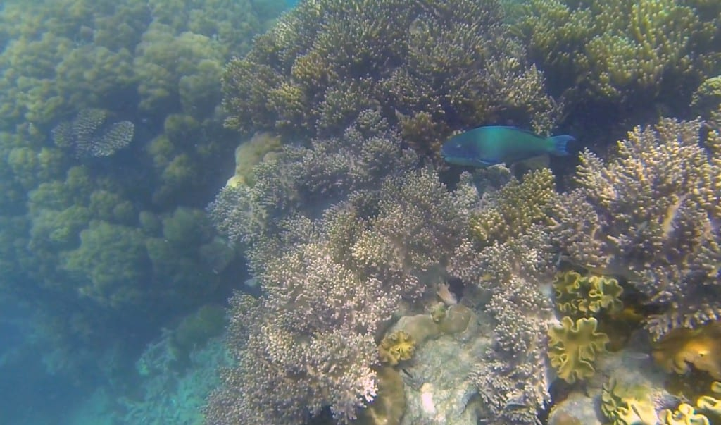 koraller4