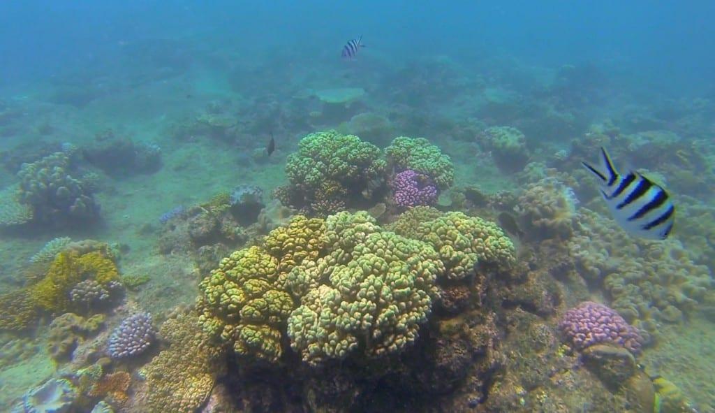 koraller5
