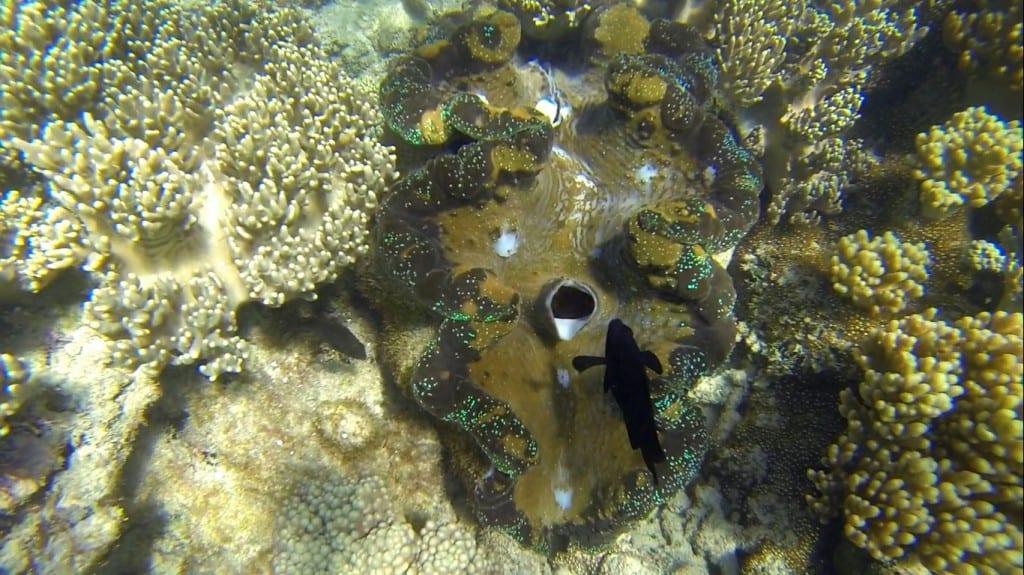 koraller7